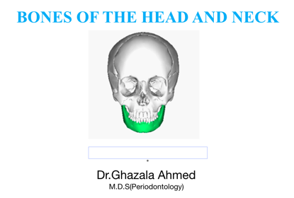 Picture of Bones of Head and Neck